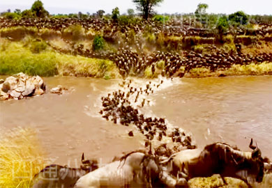 african animal migration